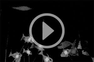 TVWork-fish